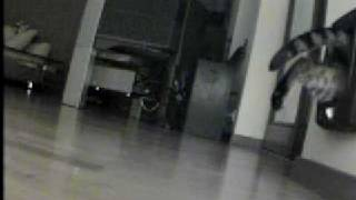 telewizja przemysłowa - monitoring wizyjny wejścia dla kota :)
