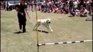 Joondalup Dog Training Rspca Demo.wmv