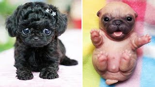 Cute baby animal Videos Compilation cutest moment of the animals - Cutest Puppies #8
