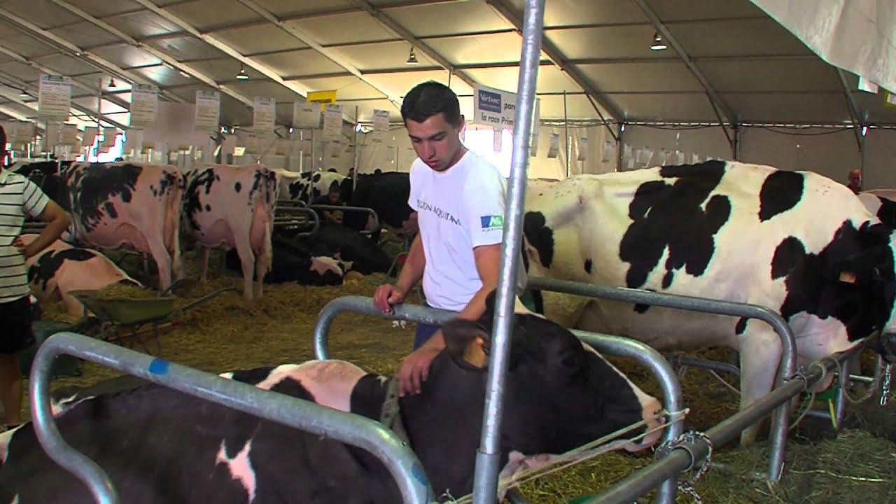 foire expo clermont ferrand sommet de l 39 elevage 2011 foire agricole clermont