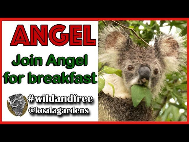 Join ANGEL for breakfast