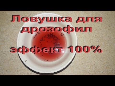 Как вывести фруктовых мошек