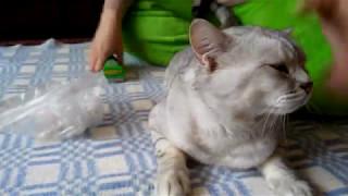Фурминатор и Кот. Как работает Фурминатор!