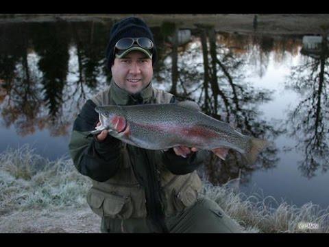 Flugfiske Regnbåge i Skarupssportfiske/ Flyfishing rainbow trout