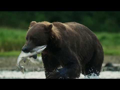 Brown Bear vs Brown Bear | Alaska: A Year In The Wild | Channel 5