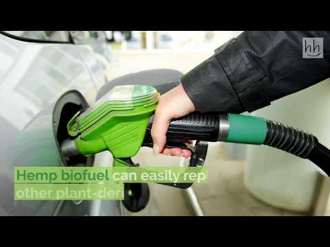 Hemp for Fuel – Using Hemp as a Biofuel!