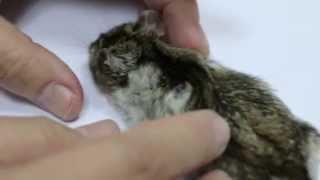 A hamster has internal bleeding