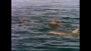 Download NOVA - Private Lives of Dolphins Mp3 and Videos