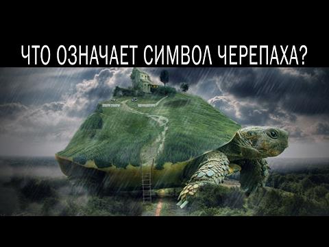 Что означает символ черепаха как символ и в подарок