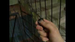 видео Видеоглазок дверной — удаленный контроль лестничной площадки