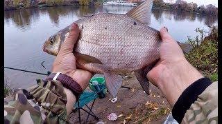 Простая рыбалка осенью на леща