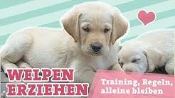 WELPENERZIEHUNG | Training, Erziehung, Regeln, Alleine lassen | Hunde Welpen erziehen |
