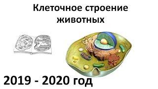 1. Строение клеток животных + систематика (7 класс) - биология, подготовка к ЕГЭ и ОГЭ 2020