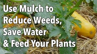 Use Mulch to Reduce Weeds, Save Water & Feed Your Plants