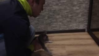 Кошка боится зеркала. Видео с феерическим концом.Смотреть до конца