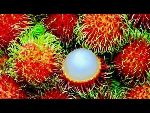 5 Incredible Health Benefits Of Rambutan
