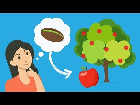 ¿Cómo nacen las frutas sin semillas? (PyR)