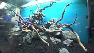 видео Аквариум для травника