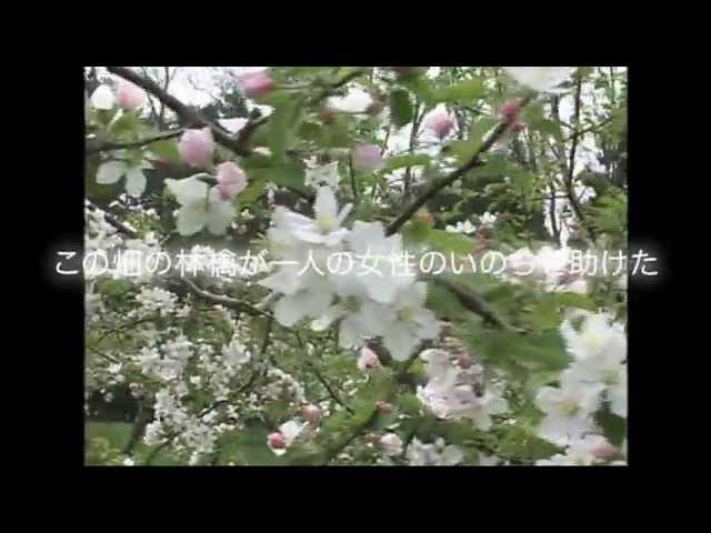 映画『いのちの林檎』予告編