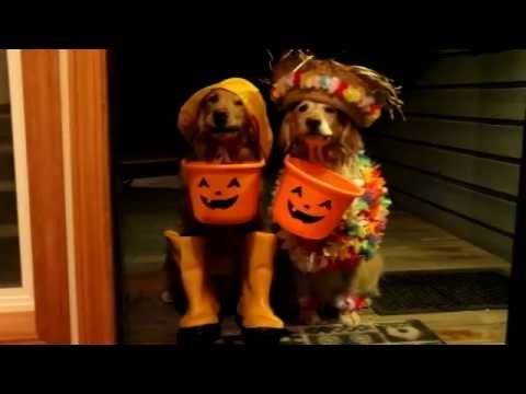 Trick or Treating Dogs