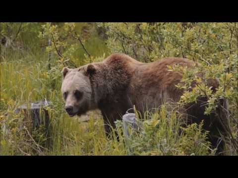 Discover Grizzly Bears Tour, Banff, Breakaway Experiences