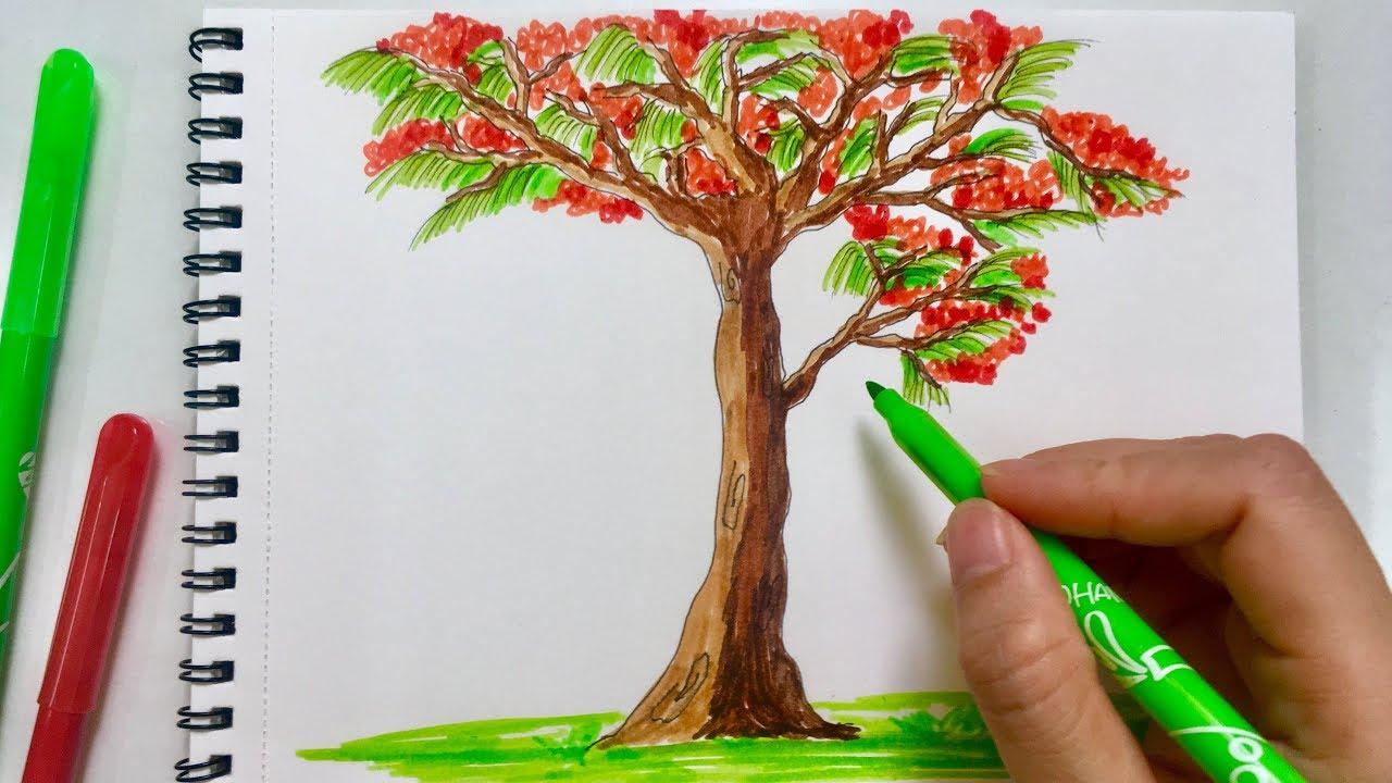 Cùng Bé vẽ tranh - Cách vẽ tranh cây hoa phượng mùa hè