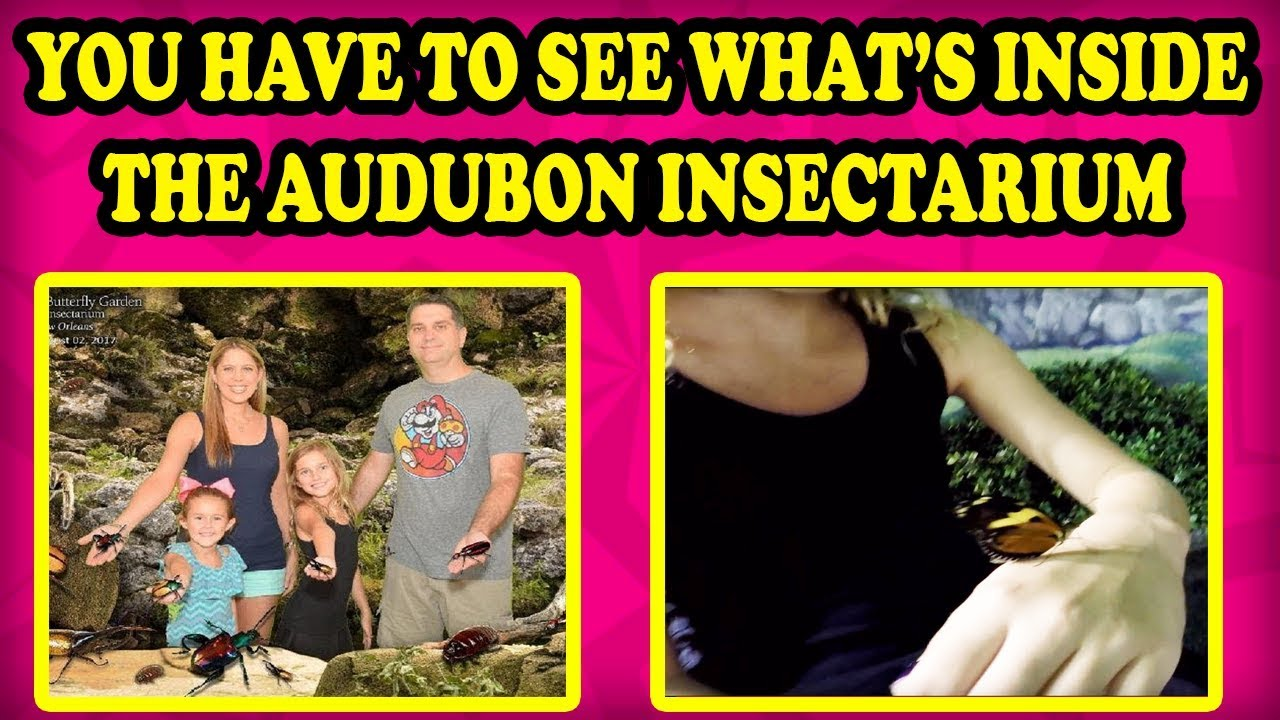 BUGS BUGS BUGS at Audubon Butterfly Garden and Insectarium! Will a ...