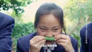 [跟着书本去旅行]傣家人最爱用的调味料之一:香茅草| 课本中国