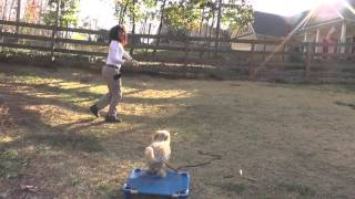 Dewey, Maltipoo Puppy, Day 4: Manners Training