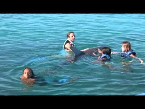 Dolphin Academy Curaçao - Nadando com os golfinhos