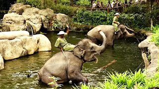 Funny Elephant Show in Singapore Zoo