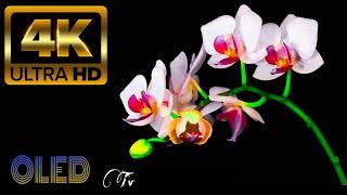 Wao! Super Amazing Beautiful 4k Flowers Video 4k Ultra HD  Flower Blooming   For 8k tv screenshot 5