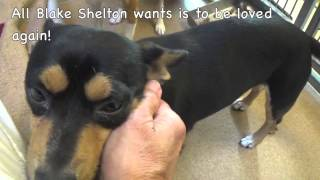 Please Help Rescue A Cute Terrier Shelter Dog Named Blake Shelton!