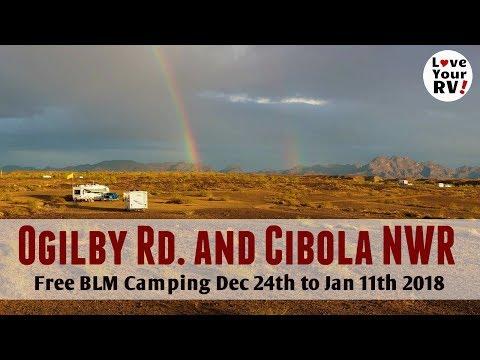 Ogilby and Cibola BLM Campsites and Birds Birds Birds!