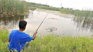 Fish hunting||Fishing,Tilapia fishing