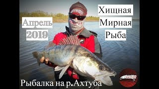 Рыбалка на Ахтубе  Ловля мирной и хищной рыбы