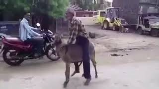 Donkey raping a man!!! Funny video!!!