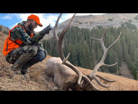 Giant Colorado Backcountry Bull Elk – Limitless 69