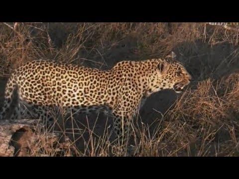 Pt 1 Safari Live's Sunset Safari Drive at 3:30 PM on Oct 16, 2017 ( Shadow & Cub )