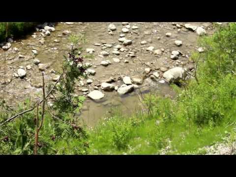 Summer Along Little Rouge Creek (Rouge Park - Toronto, ON - June 2016)