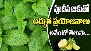 Health Benefits from Lemon & Mint Tea Morning time |Morning Lemon & Mint Detox Water |Publictalktv