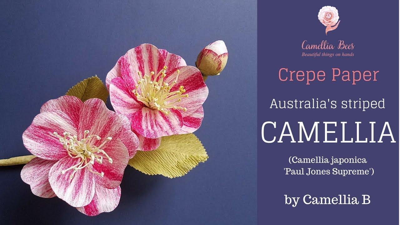 Diy crepe paper flower how to make paper camellia flower youtube diy crepe paper flower how to make paper camellia flower mightylinksfo
