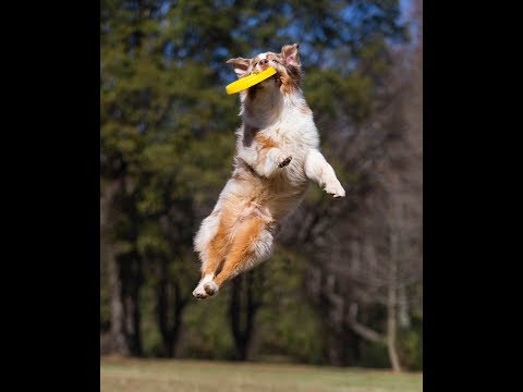 30 Amazing Dog Tricks in 90 seconds
