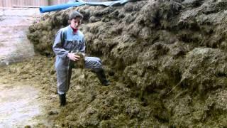 Le lait  : Tâches quotidiennes à l'élevage laitier .