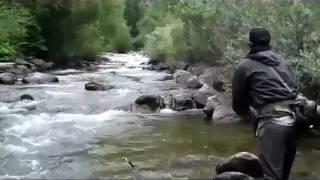 Wild Brown Trout on Boulder Creek
