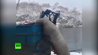 На Камчатке поедающий улов рыбаков сивуч попал на видео