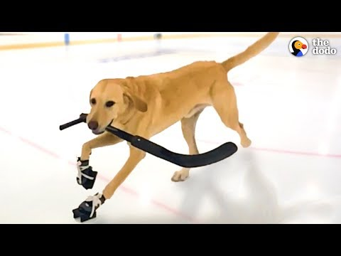 Dog That Nobody Wanted Loves Ice Skating Now | The Dodo