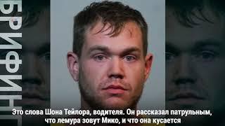 Полиция поймала пьяного водителя и его лемура