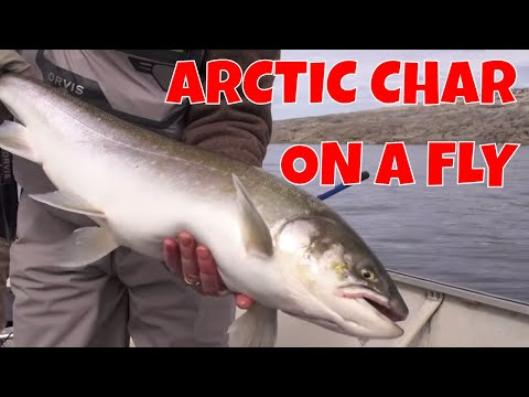 UNGAVA BAY ARCTIC CHAR ON A FLY | NUNAVIK QUEBEC