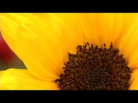Prairie Yard & Garden: A Cut Flower Garden